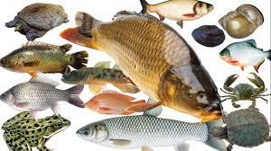 Thức ăn cho cá tạp