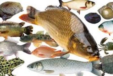 Thức ăn dành cho cá tạp